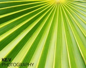 Bright Green Palm Frond Photo, Wall Decor (8x10)