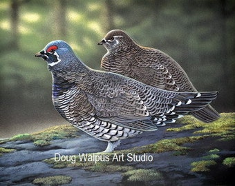 Spruce Grouse, Bird Print, Wildlife Art, Nature, Animal, Birds Waterfowl Arts and Collectibles
