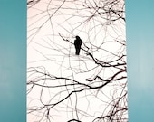 Crow Silhouette Black and White, 20 x 30 Canvas, Ready to Ship