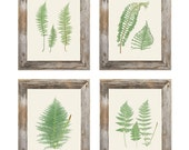 Set of 4 Fern Botanical Prints - 8x10