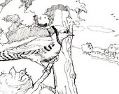 Drawing-Ink drawing-Bird Art-Black and White Art-Blue Jay at Nest-Fine Art Original by Diann