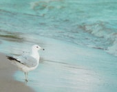 Seagull Photography 8x10, Mint Green Photo, Beach Photograph, Ocean Picture, Coastal Cottage Decor, Lake House Wall Art