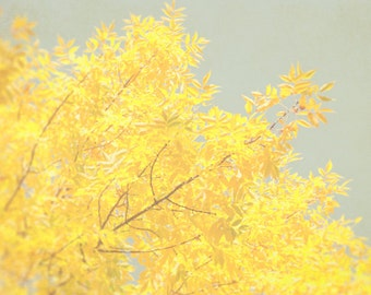 Yellow Wall Decor, Fall Photography, Autumn Tree Photograph, Nature Picture, Yellow and Gray Art
