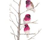 Watercolor Bird Painting, watercolor painting, bird art, bird baby room, french country decor, nursery bird, nursery watercolor, 8X10 print