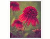 Ruby Red Flower Photo, red green, 8x10 print, ruby red bathroom wall art, paprika botanical art print, fall autumn flower, guest room decor