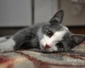 Gray Kitten - cat photo