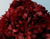 Burgundy Preserved Real Hydrangea, Three Bunches, DIY