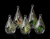 Set of 5 Pear-Shaped Orb Terrariums with Plants-2 Large Orbs and 3 Small Orbs w/Asst. Plants