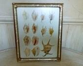 Vintage Framed Seashell Book Plate Framed Seashell Picture Framed Wall Art