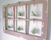Customizable Air Plant Terrarium Window - made to order in Brooklyn, NY