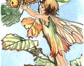 ACEO Limited Edition 9/25- The Hazel-nut fairy inspired by Cicely Mary Barker, Art print of an original watercolor painting, Flower fairy