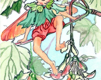 ACEO Limited Edition 1/25- The Cycamore fairy inspired by CM Barker,  in watercolor