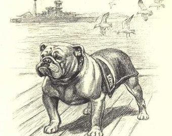 English Bulldog Sketch Photo Decoupaged on Wood