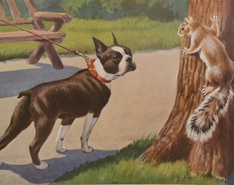 Boston Terrier Meets A Squirrel Vintage Photo Decoupaged on Wood