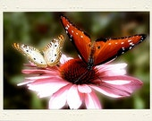 Butterflies on Pink Daisy handmade photo note card