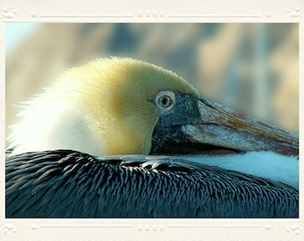 California Brown Pelican Perched in Morro Bay close-up handmade photo note card