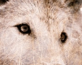 Wolf Photograph - Wildlife Home Decor Wall Art - Textured Wolf Fine Art Animal Photography Print