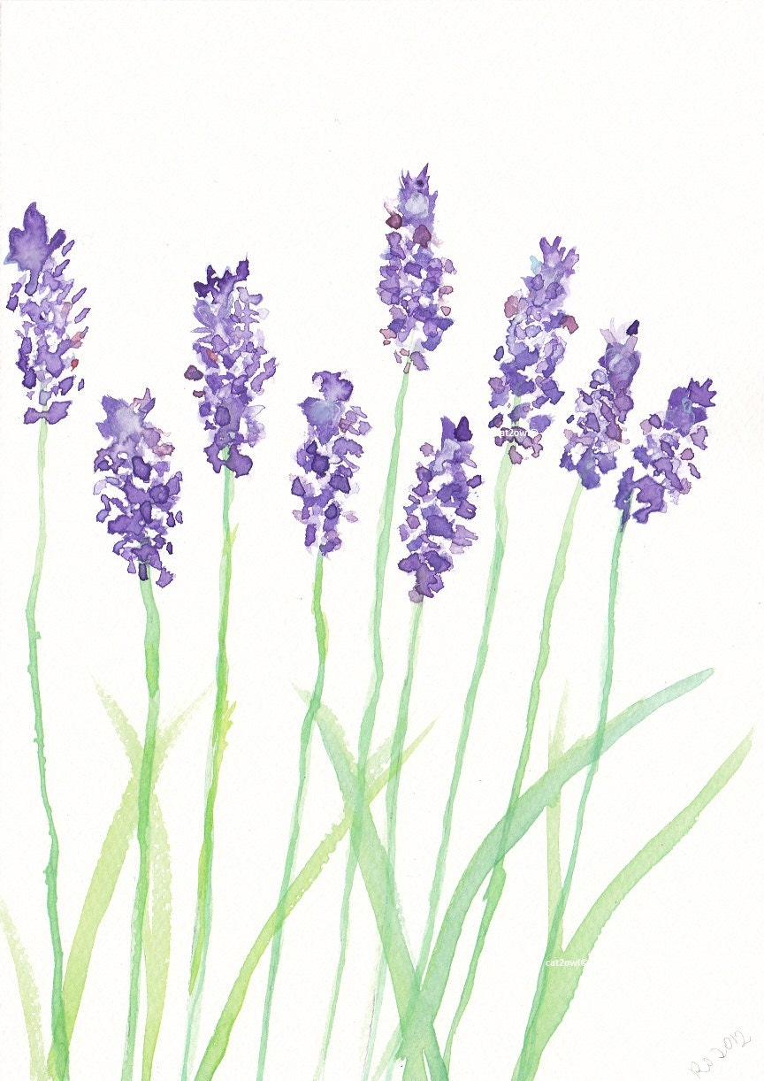 Water Lavender Colouring Pages
