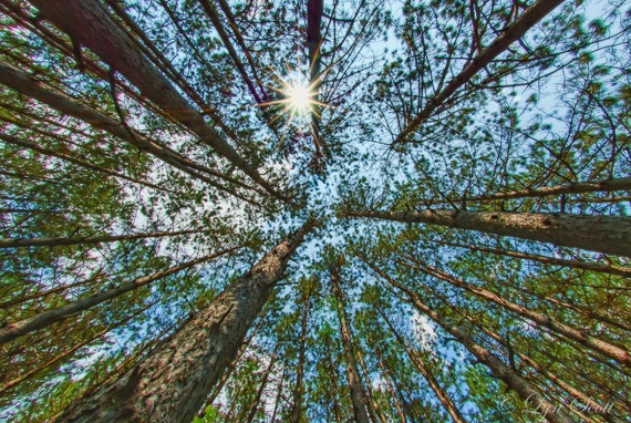 Circle Of Trees Nature Photography Landscape Photography