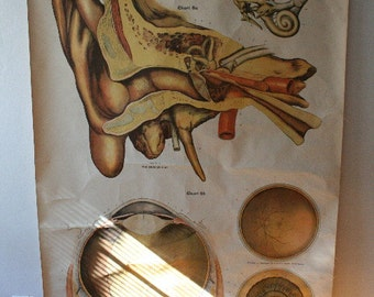 Vintage Frohse Anatomy Wall Hanging - Eye and Ear