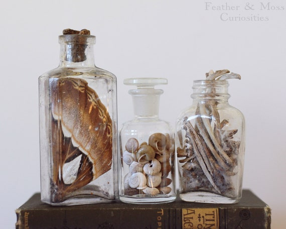 Vintage bottle trio:  Atlas moth wing, forest snail shells, and bone fragments.  Natural history curiosities.