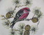 Royal Cauldon England Aviary Pine Grossbeak Ironstone Luncheon Plate Signed by Henry A. Pausch