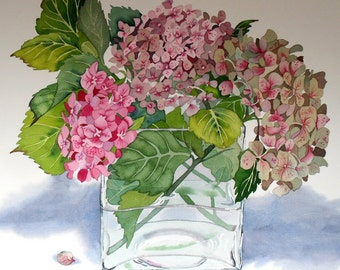 Botanical Flower Watercolour Hydrangea Pink Limited Edition Giclee Print