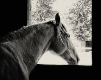 Room With A View - 8x12 Horse farm ranch stable photography print equestrian home nursery decor wall art animal window black and white view