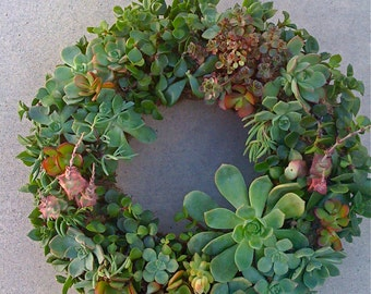 "DIY SUCCULENT WREATH,  9"" wreath form, 55 succulent cuttings, 55 floral pins"