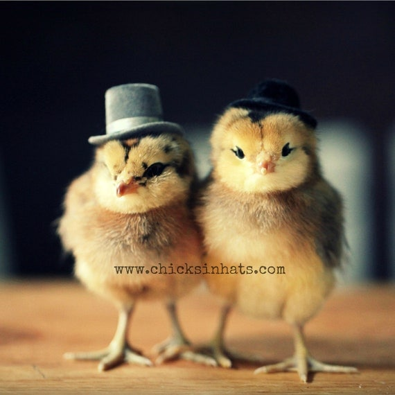 Greeting Card Set Chicks in Top Hats Folded Photo Note Cards With Envelopes (4)
