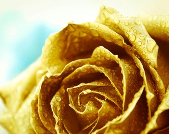 Golden Rose photo Digital Download Photography gold and blue wall art water drops flower decor
