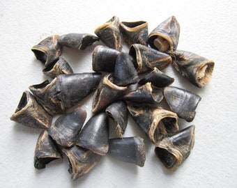 25 Deer Dew Claws  Jewelry and Craft  Projects Coyote Skull Teeth