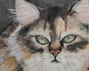 Kansas Stray Cat Portrait  - 6x6 canvas board