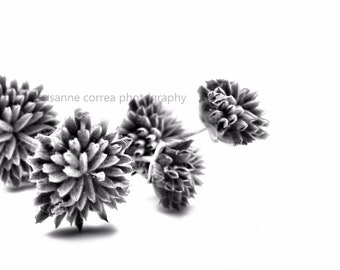 Dried Flower in Black & White, fine art photography,8x10, home decor,