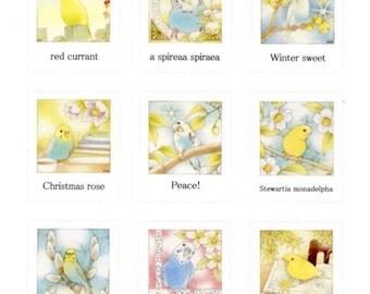 Illustrator atelier emi   Budgie / Budgerigar / Parakeet Stickers (Emi-4)