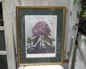 Botanical picture, Vintage flower print, large botanical print, The Pontic Rhodedendron, framed, matted