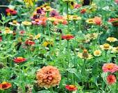 "Fine Art Photography The Magical Garden 5"" x 7"""