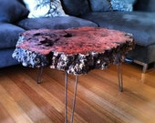 Timber Burl coffee table with hairpin legs timber table