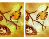 Birdking (Goldcrest nest)