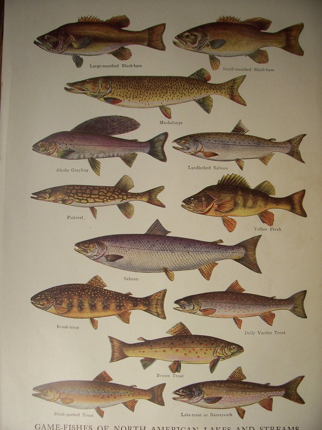 Game fish of north american lakes and by vintagepapergallery for Illinois game and fish