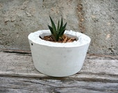 Round Concrete Planter with Spiky Succulent