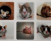 Cute Mouse Mini Stickers, Pet Photography, Whimsical,