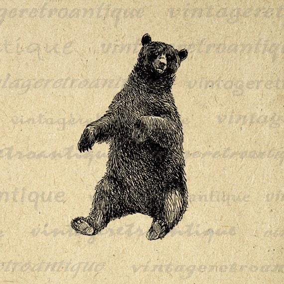 Printable Graphic Sitting Bear Download By Vintageretroantique