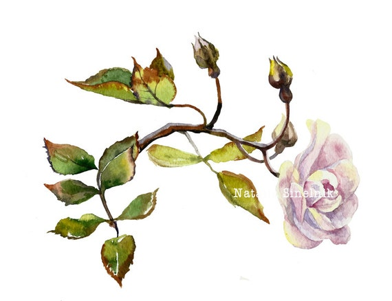 Lilac dogrose branch digital download from original watercolor illustration cottage chic painting clip art