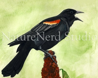 """Red-winged Blackbird on Sumac """"The Annunciation of Spring"""" - Watercolor, 8"""" x 10"""" Fine Art Print"""