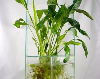 Peace lily white flower live aquarium plant