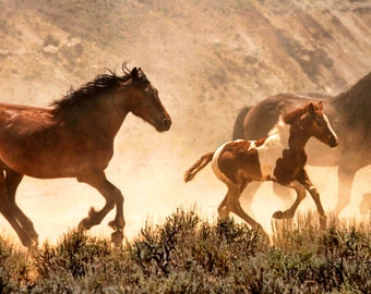 Running with the Big Dogs wild horses mustangs wyoming photography 10x20
