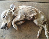 Reserved for Miguel - Mummified Pig - Payment 1 of 3