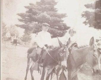 Vintage photo Children Ride donkeys in Park in Philadelphia 1903 albumen