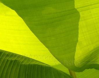 Backlit Banana LEAF Macro - BLANK 5 X 7 Nature NOTECARD frameable Art Photo with Free Origami Crane - Plant Closeup